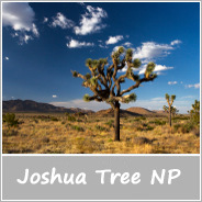 Joshua Tree ikona
